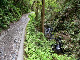 高尾山を歩いて登るならお薦め!森と水コース6号路徹底ガイド