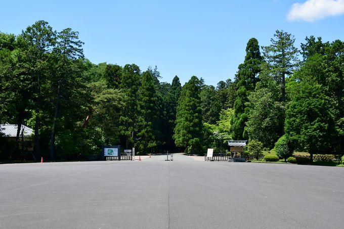 いよいよ武蔵陵墓地へ