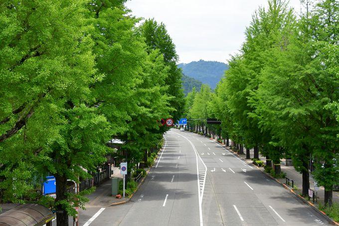高尾駅から甲州街道のイチョウ並木を辿って参道入口へ