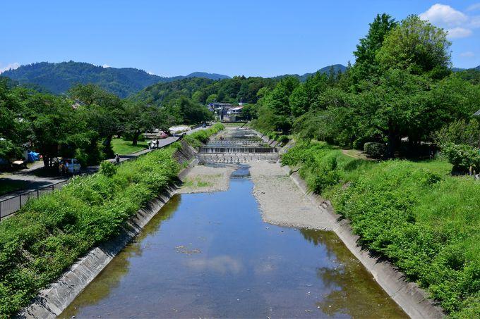 ケヤキ並木の参道と南浅川