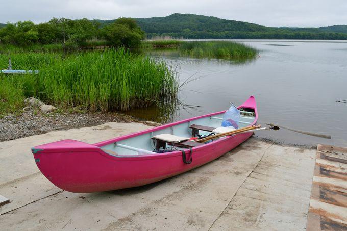 日本最大「釧路湿原」カヌーで釧路川を下り野生生物や大自然を満喫