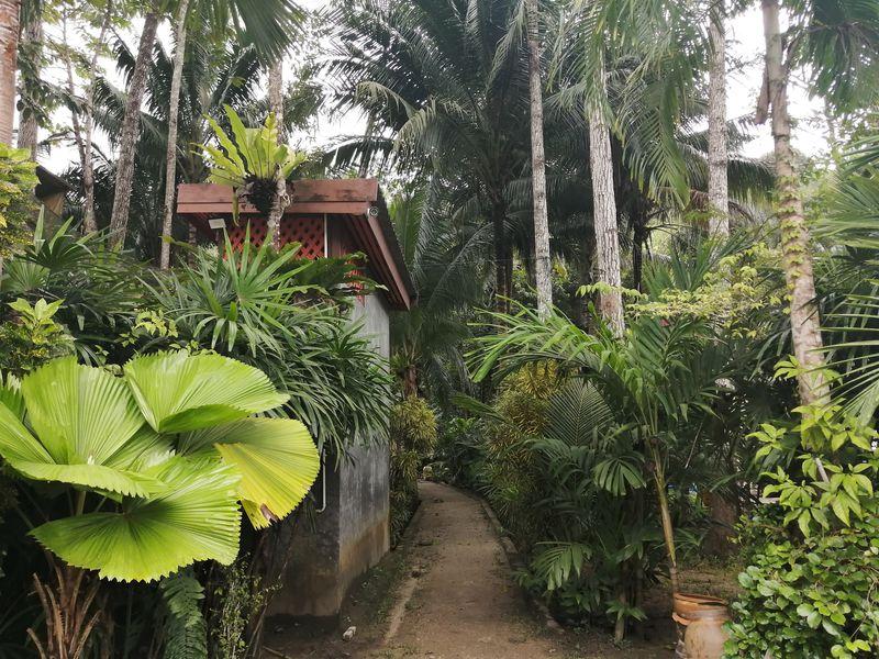ジャングルで薬草サウナ体験!プーケット「カトゥ・ハーブサウナ」