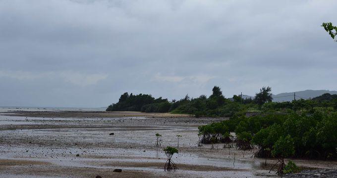 島内最大の湾 動植物育む「名蔵湾」