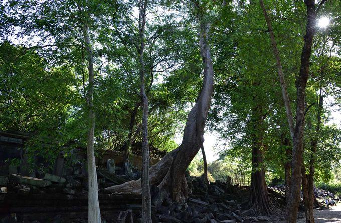 ナーガの像が訪問者を迎え入れる参道