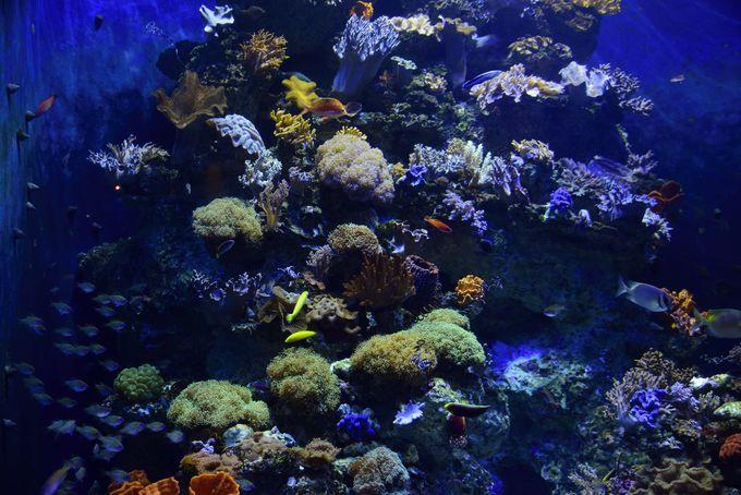 紅海やアラビア湾などインド洋の海中を再現
