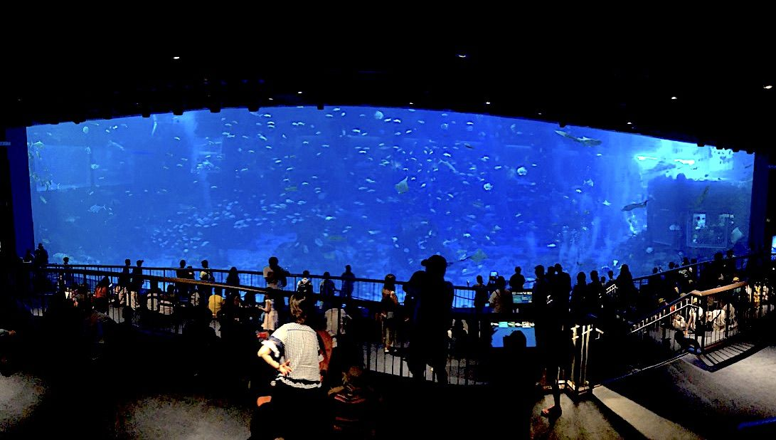 世界最大級のアクリルパネルの巨大水槽