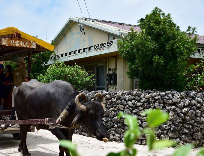 赤瓦屋根の沖縄の伝統集落