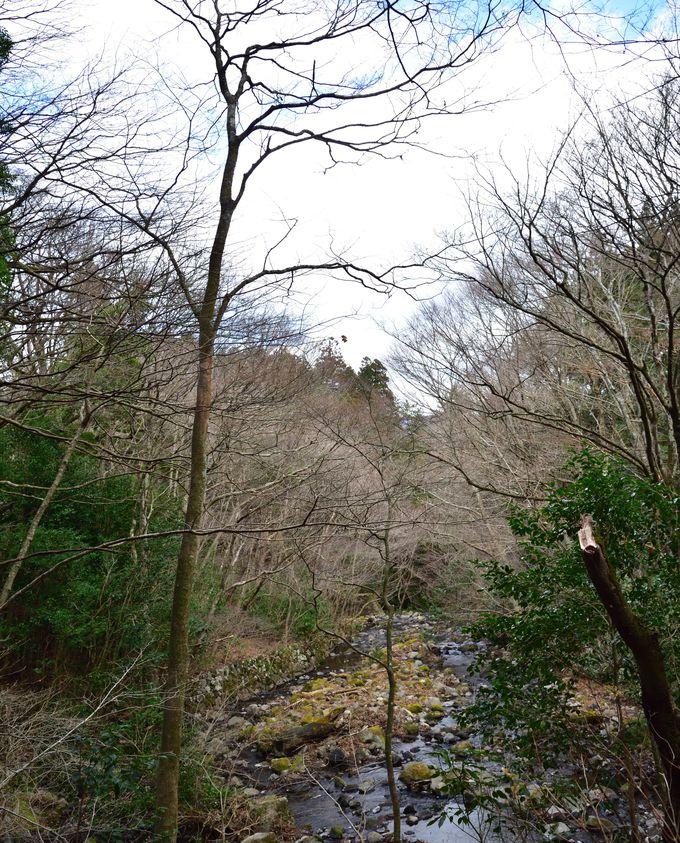 癒しの涼スポット・千条(ちすじ)の滝