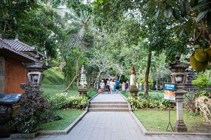 木々が神聖さを演出するお寺の入り口