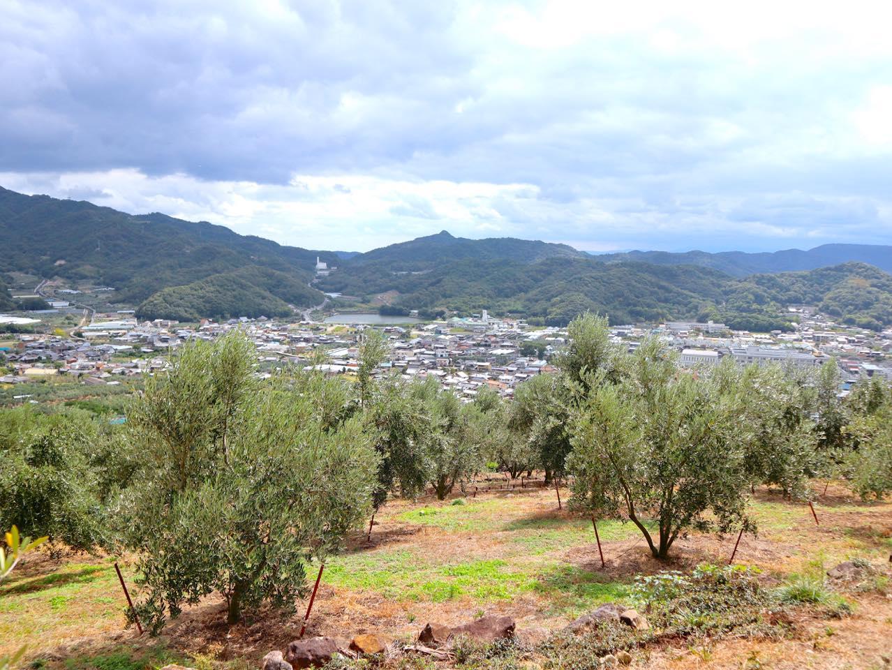 小豆島ならではの農業体験を「井上誠耕園」で