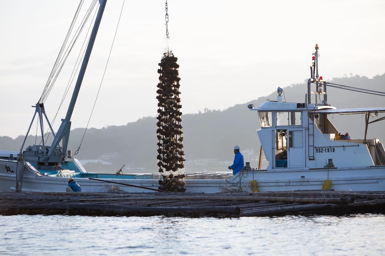 クレーンで牡蠣を引き上げる光景は迫力満点!