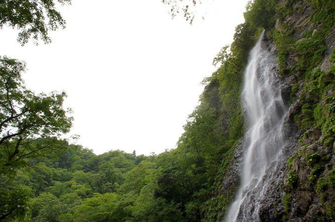 天から降ってくる自然のシャワー