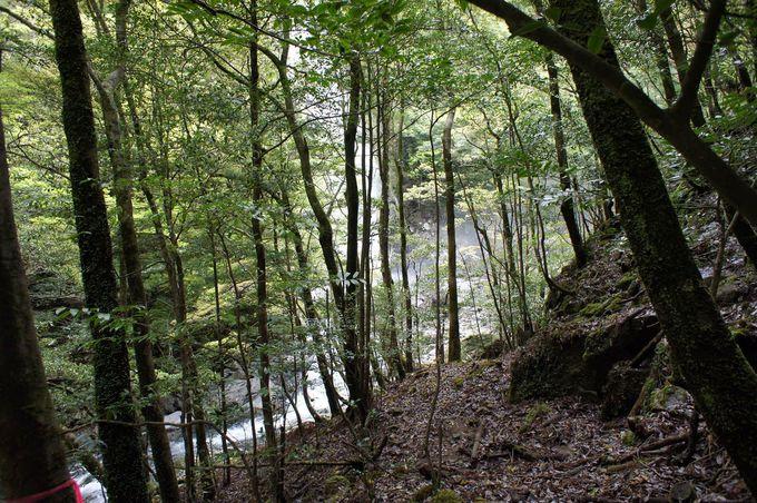 木々の向こうに白い滝が現れる