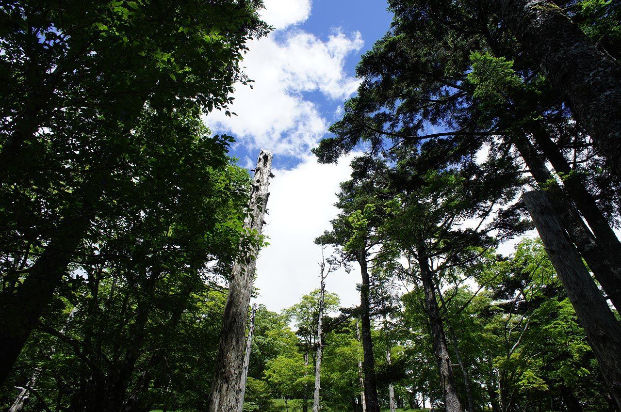 ドラマチックに展開する関西唯一の高原ハイキング 〜大台ヶ原(奈良県上北山村)