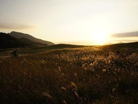 夕陽に染まる黄金色の絨毯 〜曽爾高原(奈良県曽爾村)