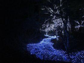 滝と光のコラボレーション!自然と融合したイルミネーションに心癒されて〜冬ほたる(京都府京丹波町)
