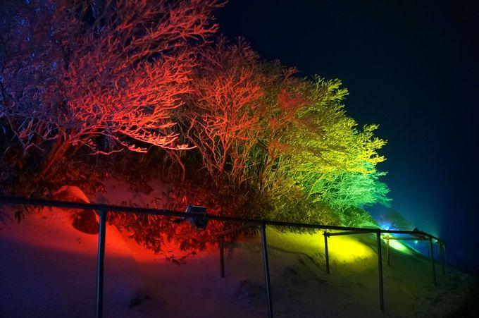 色とりどりにライトアップされる樹氷