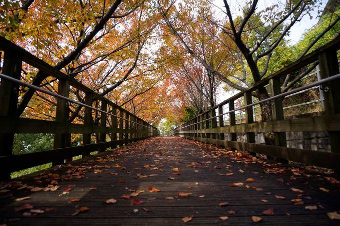 秋には紅葉が楽しめる