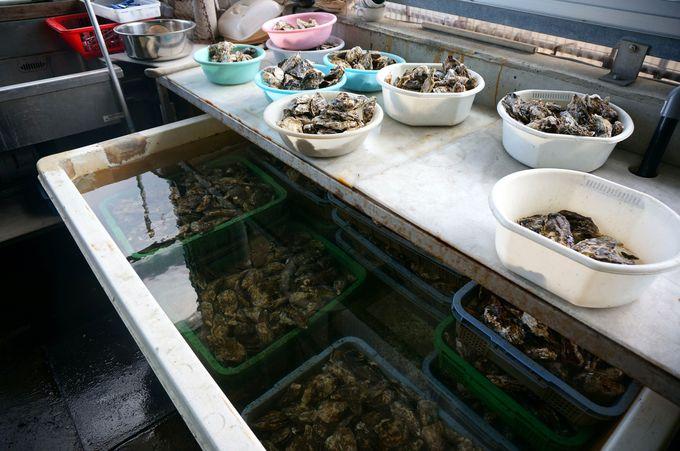 牡蠣小屋で食す絶品焼き牡蠣