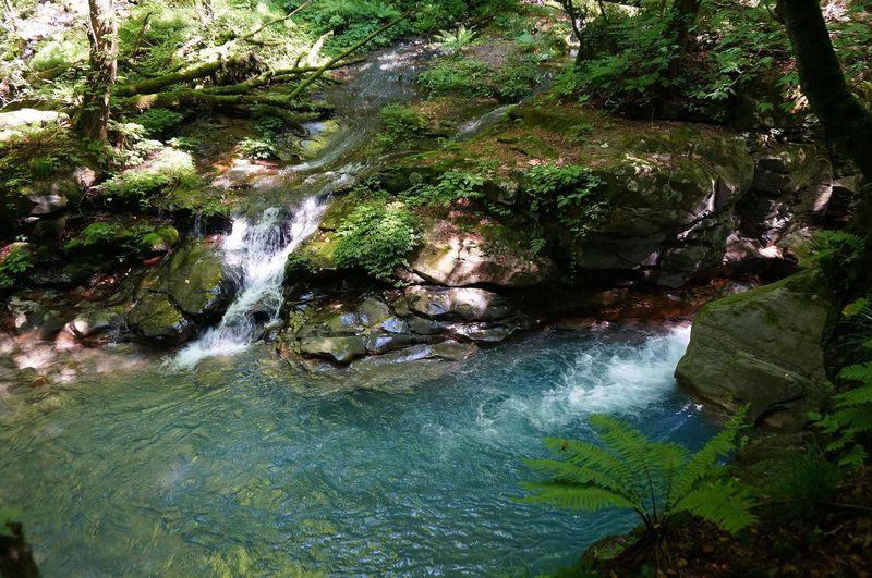 至る所から湧水が流れる水の楽園