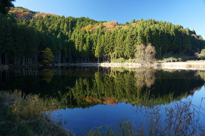 人里離れた静かな池