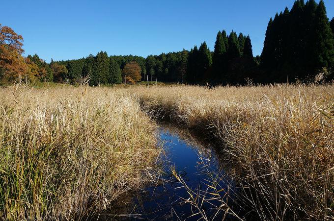 龍王ヶ渕の東側は湿原となっている