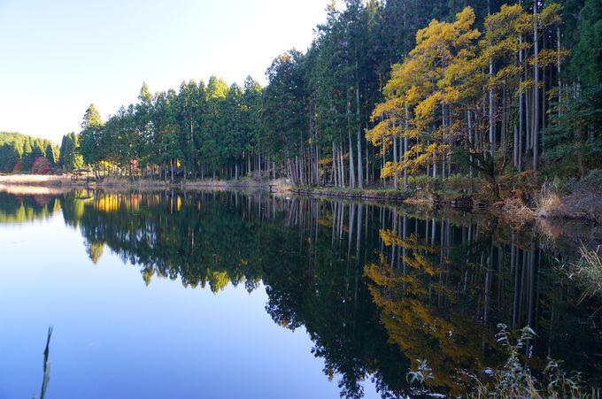 木々が水面に映る