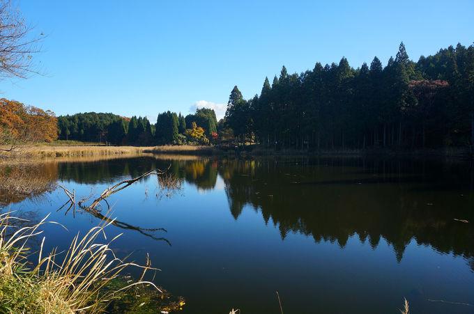 池に沈む朽木が美しい