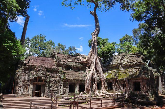 午後:遺跡に巻き付く大木が迫力満点のタ・プローム