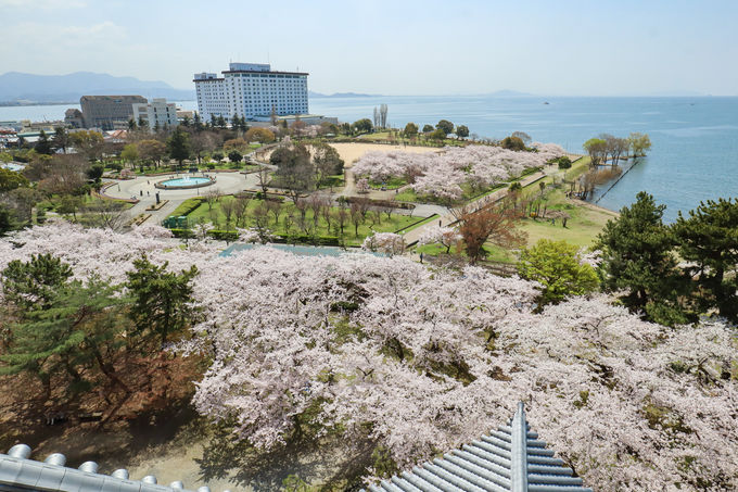 ホテルから長浜城までは歩いてすぐ