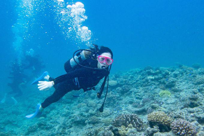 ケラマブルーの海に恋
