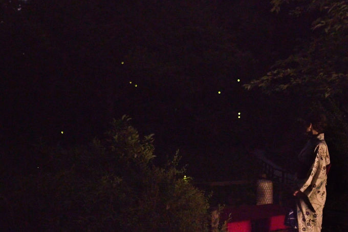 ほたるが美しい日本庭園の中を舞う 幻想的な真夏の夜