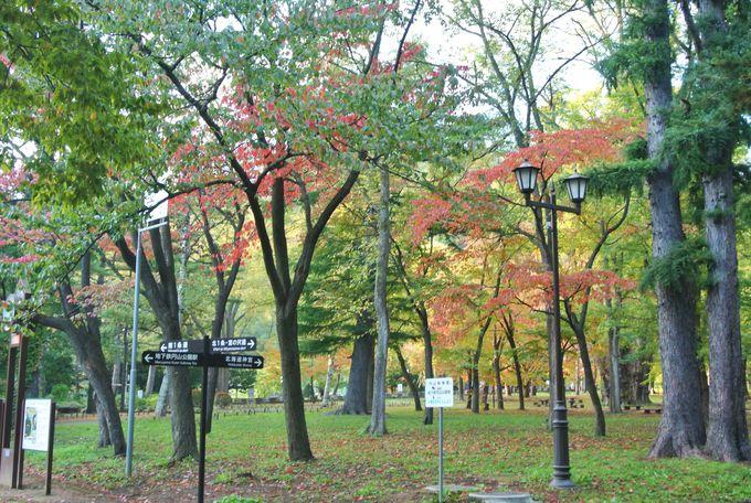 円山公園とパワースポット・三角ポプラ