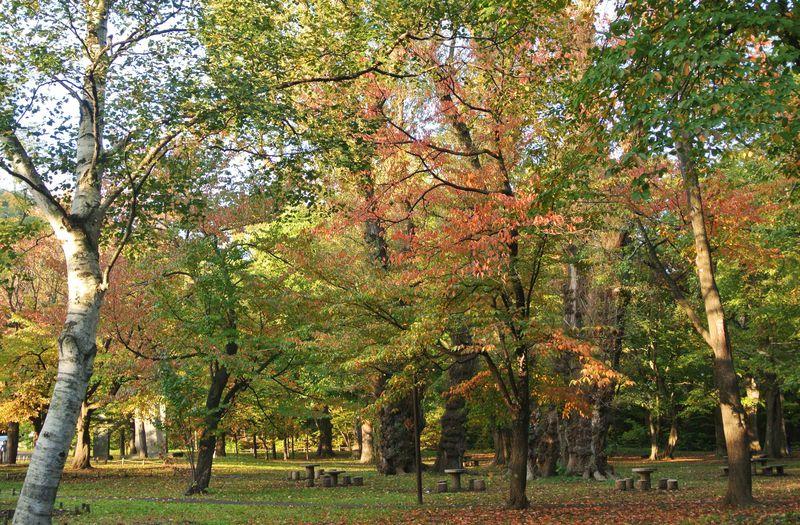 札幌円山の秋・パワースポットとリスの聖地で癒される