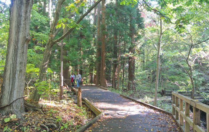 円山山麓のパワースポット・光の樹の周辺には「リスの聖地」が!?