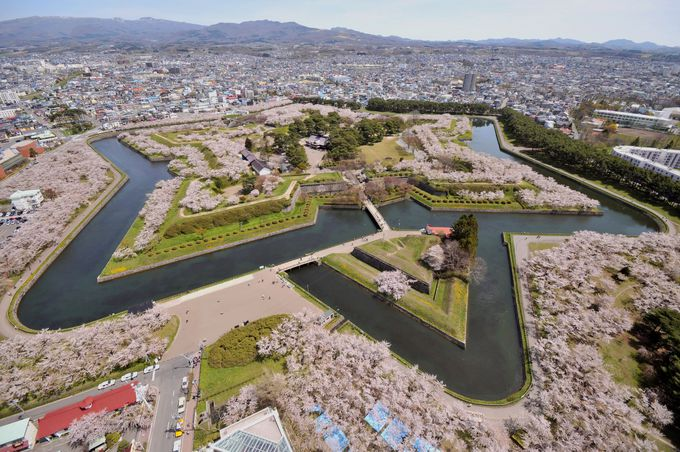 五稜郭の桜(函館市)
