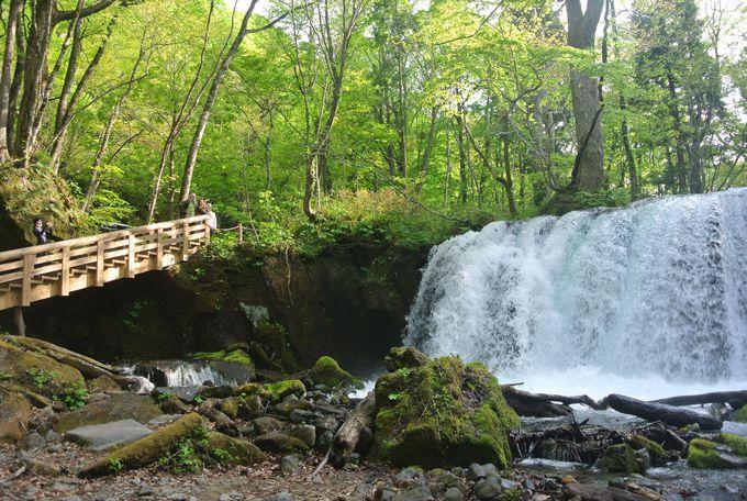 奥入瀬の滝でパワーチャージ