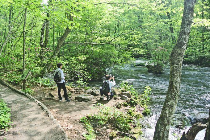 奥入瀬渓流で「氣」を浄化