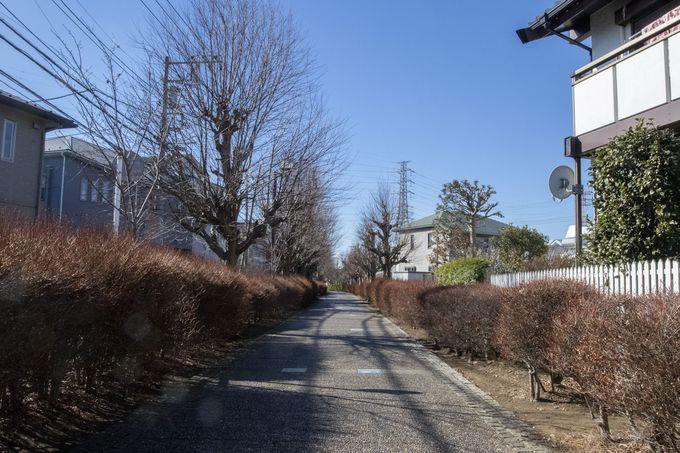 寒川駅から廃線跡「一之宮緑道」を目指して