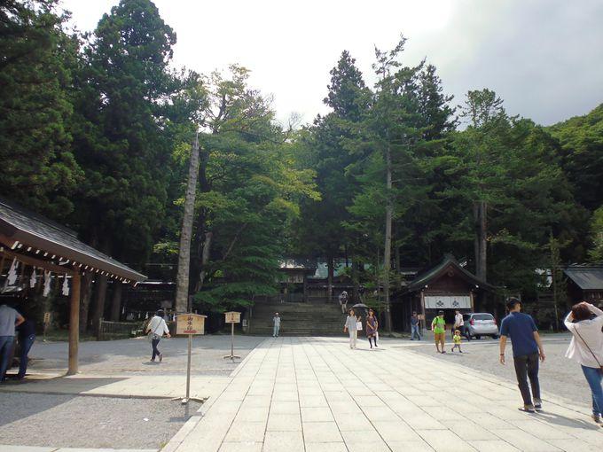 巨木のなかにひそむ御社殿