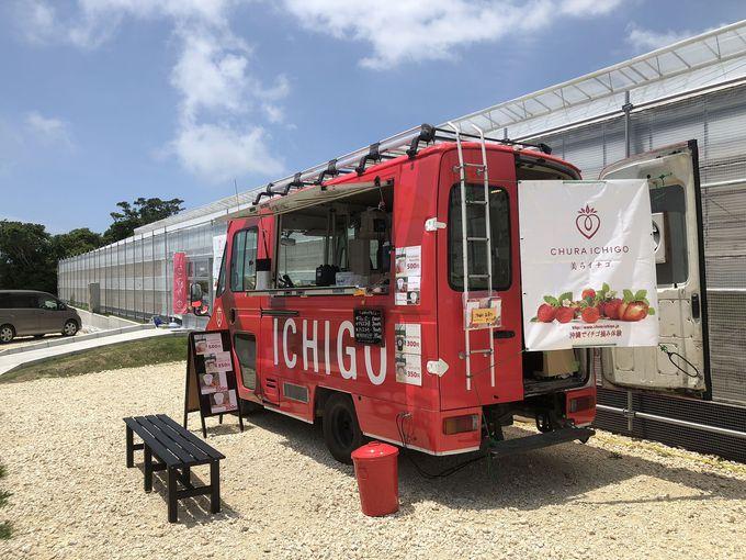 島イチゴを使ったスイーツも!美らイチゴのフードトラック