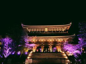 桜が主役!京都・知恩院 2019年春のライトアップ