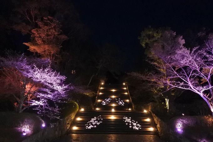 女坂・阿弥陀堂・男坂のライトアップ