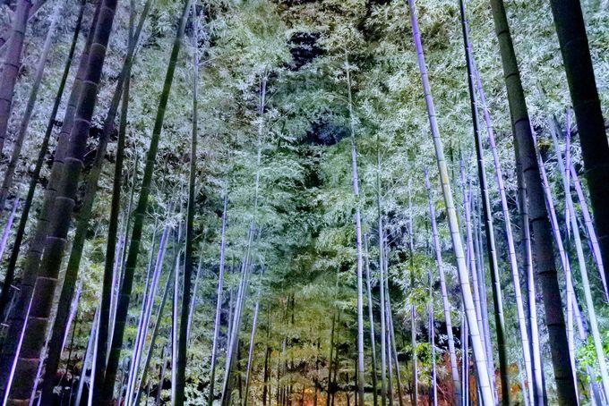 広大な庭を散策しながら楽しめる高台寺のライトアップ