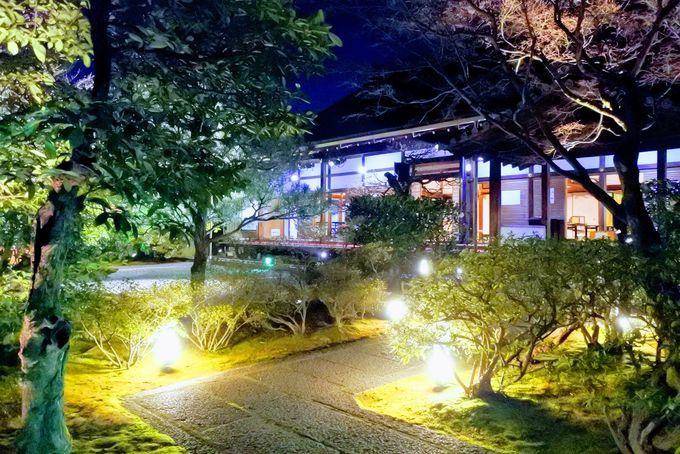 実は穴場!見事な圓徳院のお庭とライトアップ