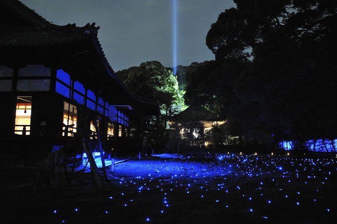 青い光に照らし出される見事なライトアップ