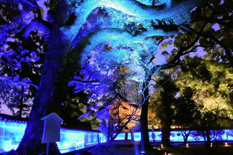 京都・青蓮院門跡で雅な香りに誘われる春のライトアップ