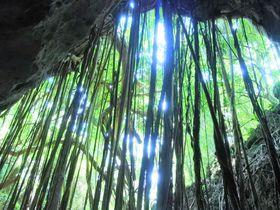 新登場!沖縄「ハンターバンの森」でパワースポットを冒険