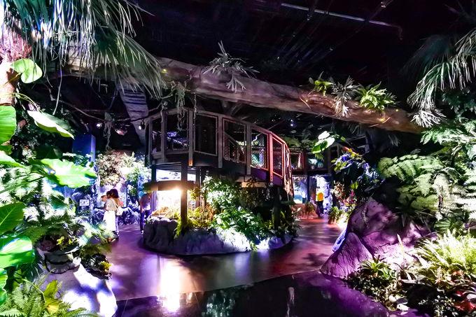 ホントに水族館?多彩な生き物が暮らす亜熱帯の森