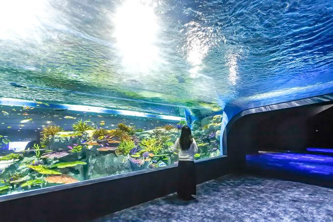 癒やしとワクワクを同時に味わえる水族館